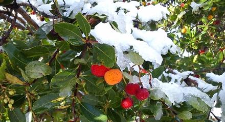 CoCo division, finde, nieve