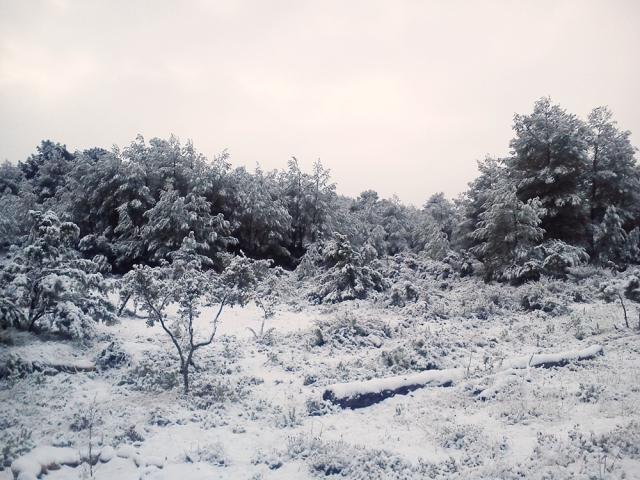 CoCo division, nieve