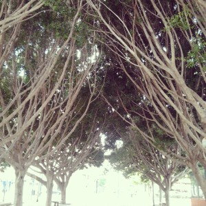 bóveda árboles